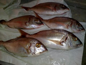 how to recognize a fresh fish